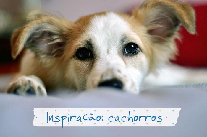 cachorros01