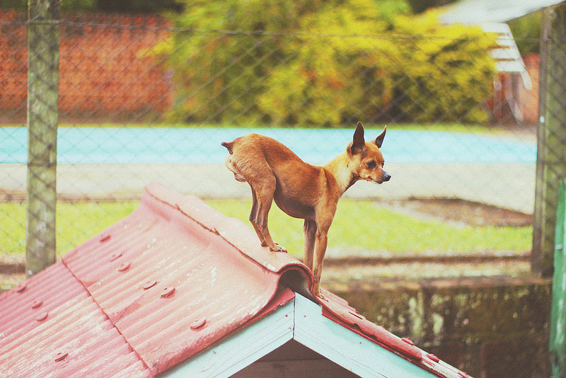 galeria_leitores_cachorros_03