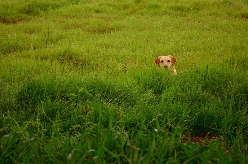galeria_leitores_cachorros_05